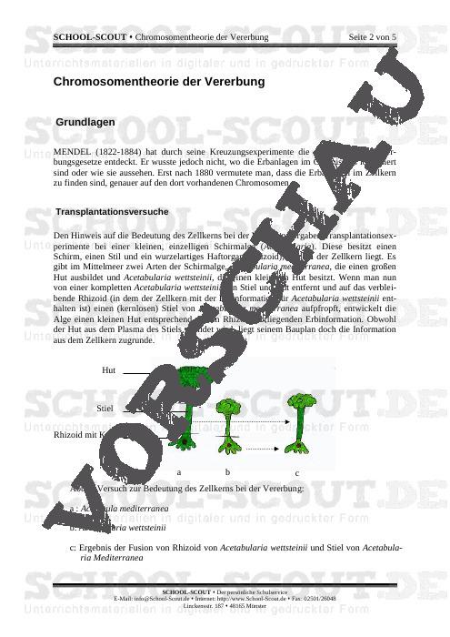Chromosomentheorie der Vererbung - School-Scout Unterrichtsmaterial Biologie - Biologie