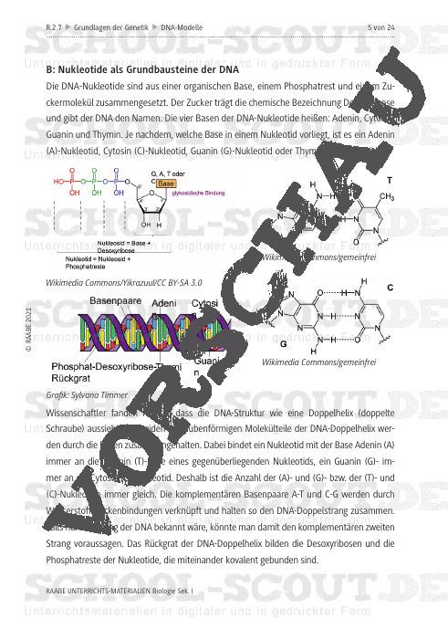 DNA-Struktur durch Modellbau verstehen - Die Raumstruktur der DNA - Biologie